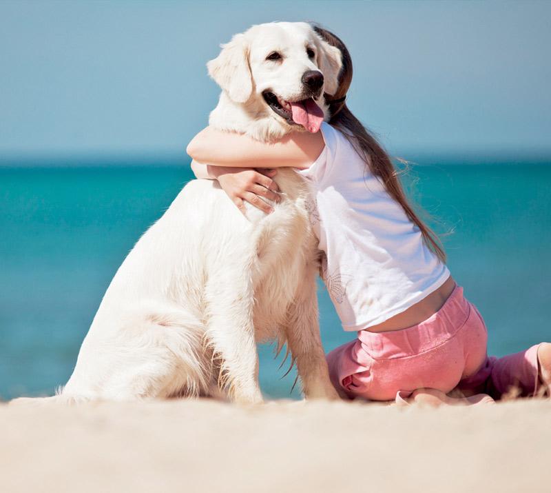 Dog Transfer Sicily